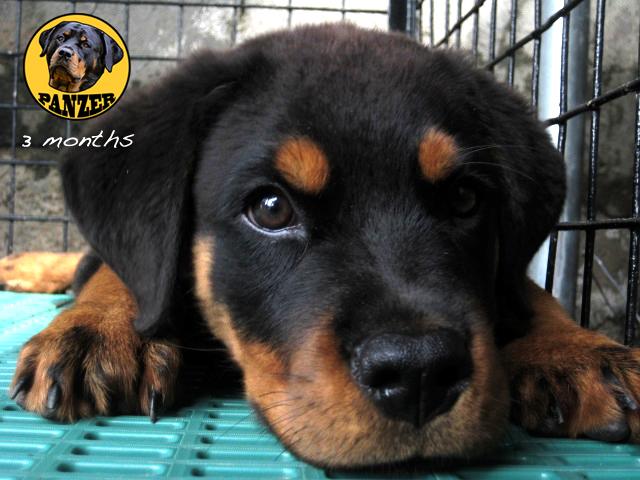 Such a good puppy - 2 8